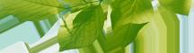 slide2-leaves.png